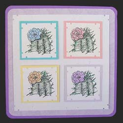 4-Color Blooming Cactus